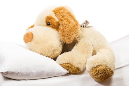 snugly: Fluffy soft toy dog lying on the bed with a pillow on a white background