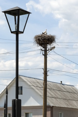 dwelling house: Stork with two children sitting in his nest on the electric pole near the dwelling house on the sky background Stock Photo