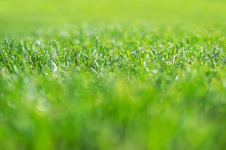 background of green dense grass blurred with narrow focus strip in the middle