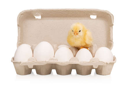 chicken on a tray with eggs Standard-Bild