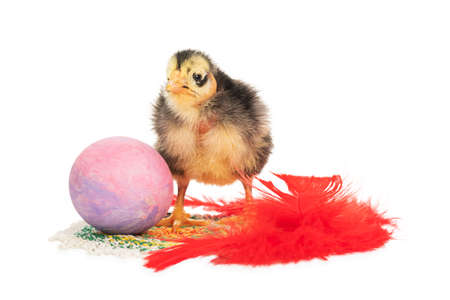 ugly chick, egg and feather
