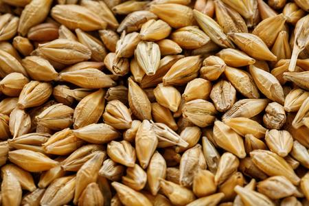 A pile of pearl barley grains, vegetarian food, golden seeds