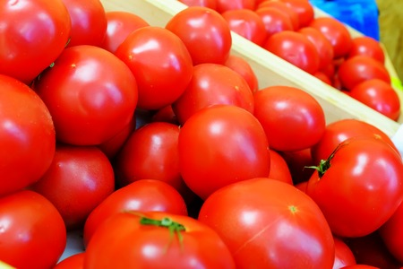 Very fresh and delicious red tomatoes. Stok Fotoğraf