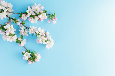 Sakura in fiore primaverile su sfondo blu con spazio per un messaggio di saluto. Il concetto di primavera e festa della mamma. Bellissimi fiori di ciliegio rosa delicati in primavera. Vista dall'alto