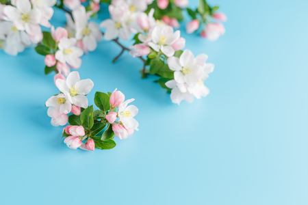 Blooming spring sakura on a blue background with space for a greeting message. The concept of spring and mother's day. Beautiful delicate pink cherry flowers in springtime. View from above