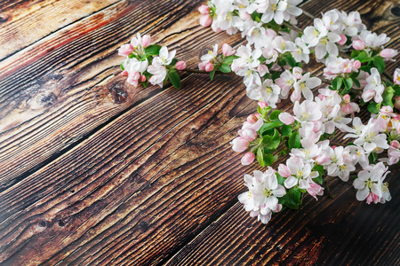 Sakura blooming on a dark rustic wooden background. Spring background with blossoming apricot branches and cherry branches. Valentines Day and Mothers Day background. View from above.