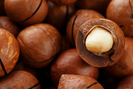 Texture of organic macadamia nut fresh natural fruit shelled one nut in full frame close-up view. Sawn shell Stock Photo