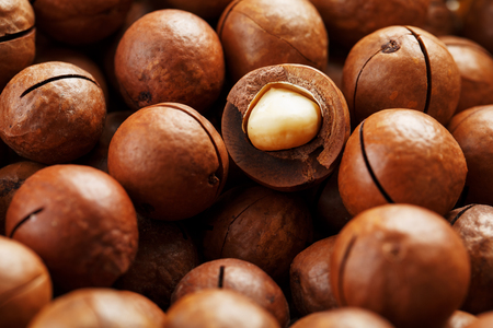 Texture of organic macadamia nut fresh natural fruit shelled one nut in full frame close-up view. Sawn shell