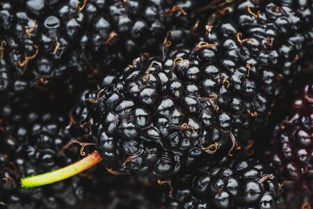 Ripe and fresh fruit of black mulberry, healthy food of juicy mulberry fruit. Close-up, the texture of the berries on the full frame. Macro Stockfoto - 125843193