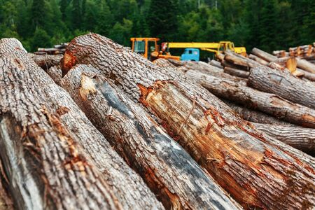 A pile of cut logs in the forest. Logging near a sawmill in a rural area, with fallen wood. Logs in the foreground, technology in the background 写真素材