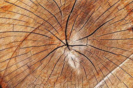 Der Stumpf eines gefällten Baumes, ein Schnitt des Stammes mit Jahresringen und Rissen, die Textur des abgesägten Stumpfes. Vollbildschirm