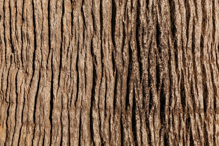 Textured bark of a noble tree. Full screen as background