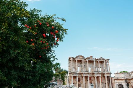 Celsus libraries against the blue sky and a tree with pomegranates in Ephesus, Turkey. Bottom up view