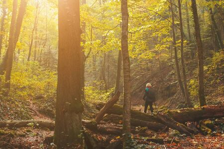A child with a backpack stands with his back on a log in the autumn forest with trees and golden foliage in the riverbed, with soft sunlight. Caucasus