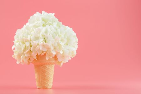 White flowers in a waffle cone of ice cream on a pink background. Minimal concept.