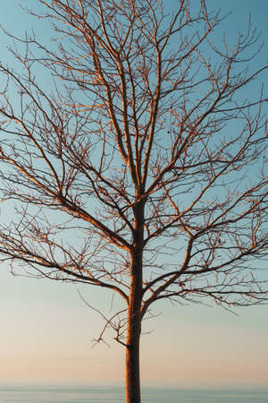 Silhouette of tree branches without leaves on a sky blue background. Customized evening sky with conceptual spider web