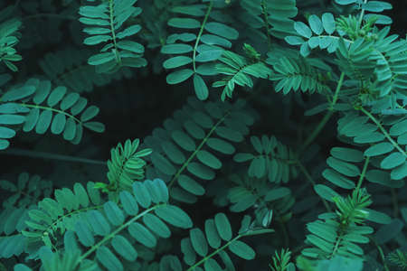 Background of green tropical plants with small juicy leaves in a row in a dark key with a soft contrast. A conceptual ecological creative model of nature. The apartment was lying.