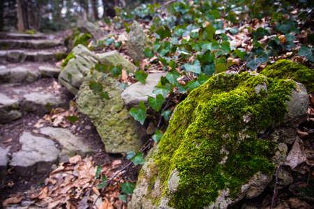 a path through the woods in Schoenbrunn park, Vienna Austria