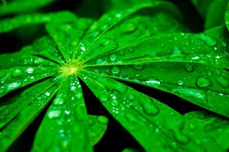 свежие зеленые листья с каплями воды после дождя Фото со стока