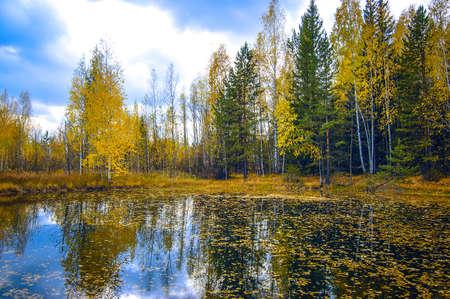 осенние деревья отражаются в воде Фото со стока