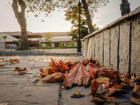 упал желтые осенние листья на каменной мостовой