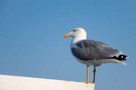 Чайка сидит на крыше на фоне неба
