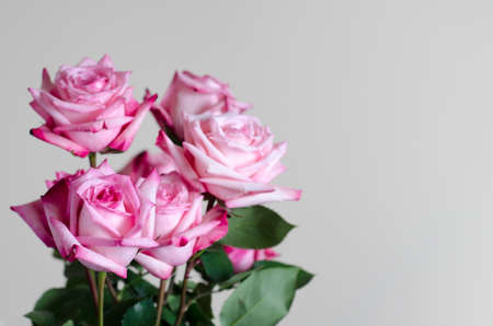 bouquet of  fresh pink roses on uniform background Stock Photo