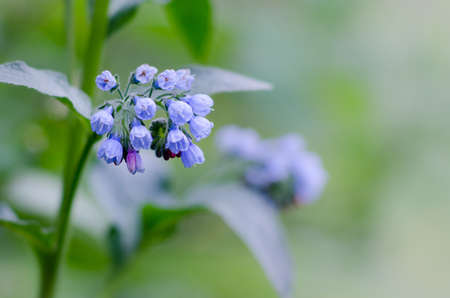 синие лесные цветы на фоне размытого