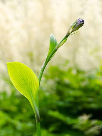 распускаться синий цветок с размытым зеленым фоном