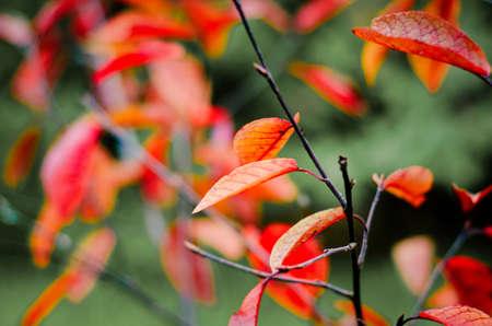 красные осенние листья с размытым фоном Фото со стока - 75273084