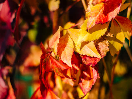 red autumn leaves with blurred background