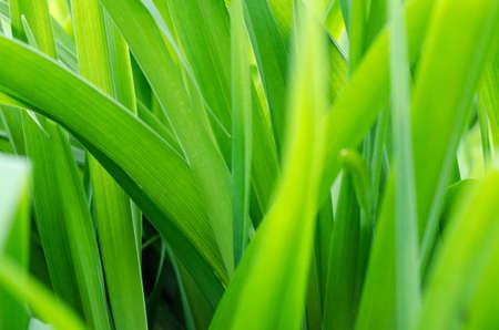 размытый фон со свежей зеленой травой