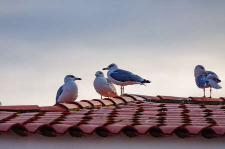 seagulls sitting on a roof covered with red tiles