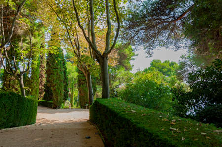 дорожка в парке Средиземноморского с яркой зелени Фото со стока
