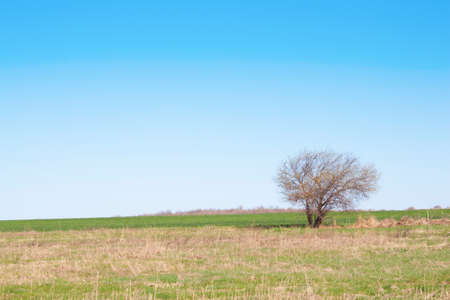 Wheat field with tree. Spring shot. Stock Photo - 13127513