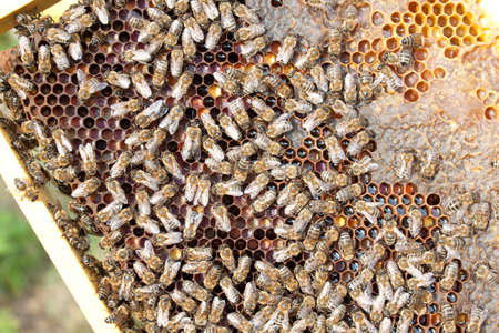 Bees on honeycomb.  Late autumn shot. photo