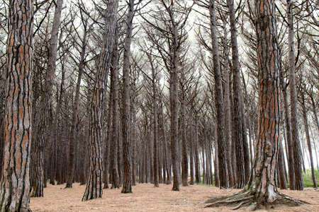 Forest of bare trees