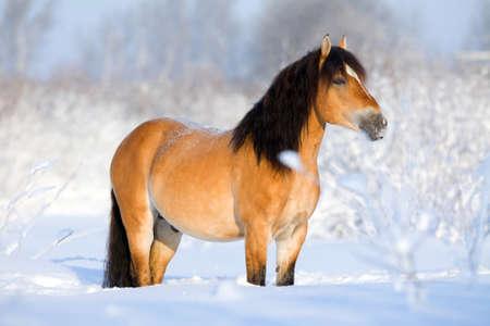 Bay horse standing in snow in winter