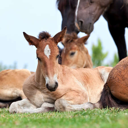 Foal lying on grass photo