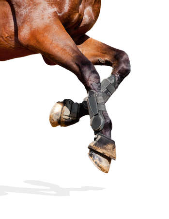 harness: Horse legs isolated on white background
