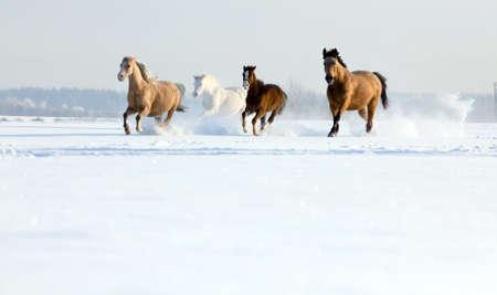 gente corriendo: Caballos corriendo en el invierno Foto de archivo
