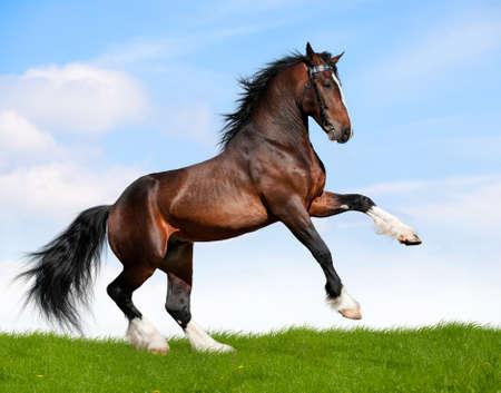 caballo saltando: Bahía de caballo que corre en el campo