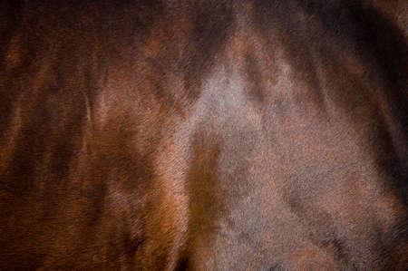 textura pelo: Bah�a de piel de caballo