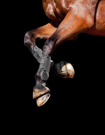 hooves: Gambe a cavallo isolato su sfondo nero
