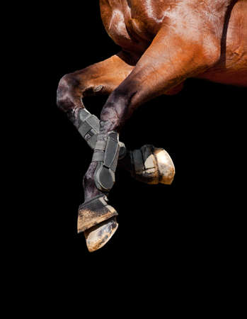 horse harness: Horse legs isolated on black background