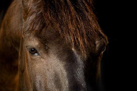 Horse head isolated on black background