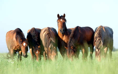 galloping: Group of horses eating grass in field