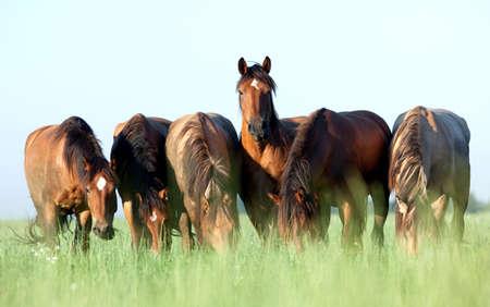 Gruppo di cavalli mangiare erba nel campo Archivio Fotografico - 13157931