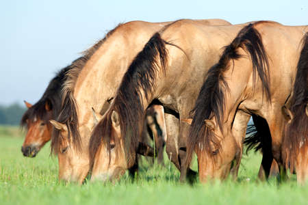 Group of horses eating grass in field