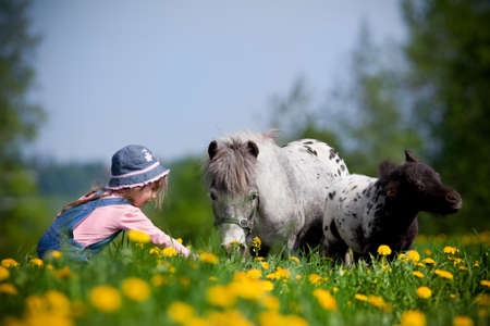 Child with small horses in the field. photo